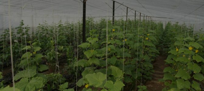 GREENHOUSE AND AGRICULTURE CORDS